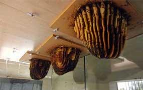Se pueden contemplar colmenas vivas y su funcionamiento