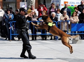 La unidad canina de la Policía organiza unas jornadas sobre adiestramiento