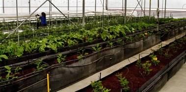 La Comunidad pone a disposición de los agricultores de la región más de 500.000 plantas autóctonas