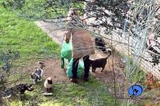 La Concejalía de Medio Ambiente impulsa el control de las colonias felinas de Valdemorillo