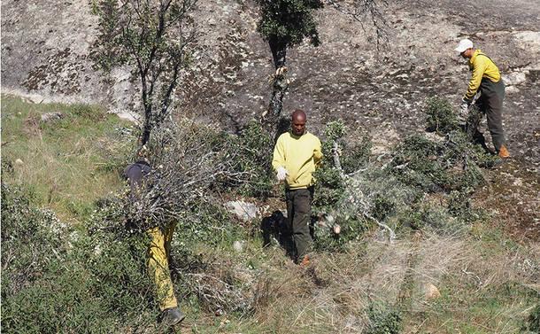 Se inician las labores de limpieza y mantenimiento forestal del entorno del Polideportivo y de la avenida de la Dehesa en Torrelodones