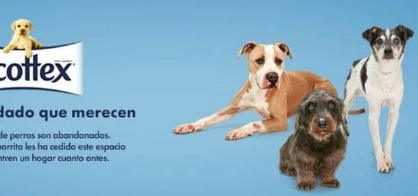 Los animales del Centro de Acogida de Guadarrama protagonizan la campaña de adopción de 'Scottex'