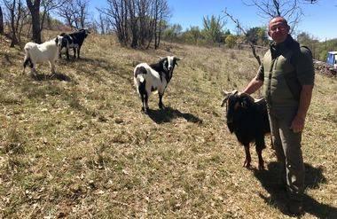 El Ayuntamiento entrega las primeras cabras guadarrameñas a ganaderos afectados por ataques de lobos