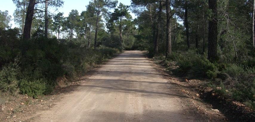 Resultado de imagen de pista forestal