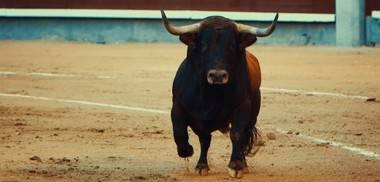 'Villalba Viva' y 'Gladiadores por la Paz' agradecen que no se hayan celebrado toros en San Antonio