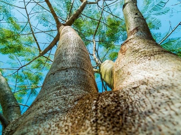 Guadarrama aprueba el crédito necesario para crear un parque forestal, un inventario de árboles y nuevos huertos urbanos