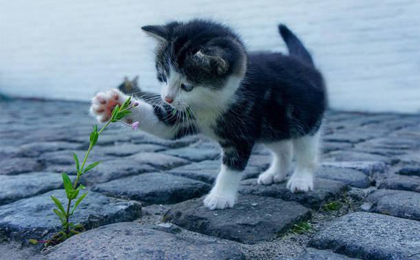 El Ayuntamiento refuerza el control y la gestión ética de las colonias felinas de Torrelodones