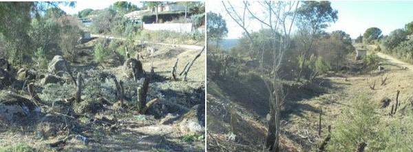 Ecologistas y vecinos de Cerro de Alarcón denuncian talas excesivas en el encinar que rodea la urbanización