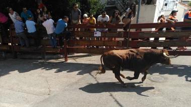 Un toro hiere a un vecino y siembra el pánico en los encierros de Galapagar