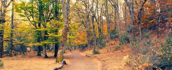 La Comunidad de Madrid conmemora la declaración de la Sierra del Rincón como Reserva de la Biosfera