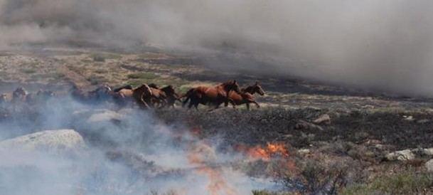 Un piloto de la brigada helitransportada de Madrid salvó a 27 caballos de morir quemados en La Granja