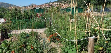 Abierto el plazo de solicitud para optar a los huertos urbanos de Collado Villalba