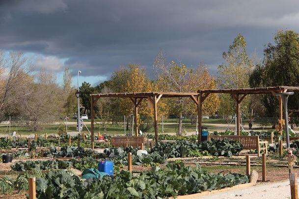 El Ayuntamiento de Collado Villalba adjudicó 66 parcelas de Huertos Urbanos en la zona de Los Valles