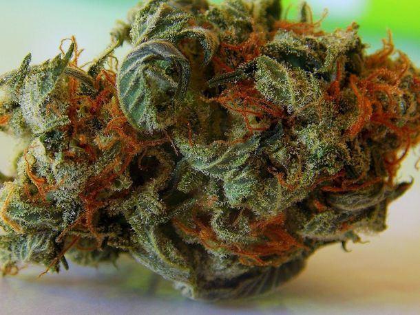 Tipos de semillas de marihuana y propiedades